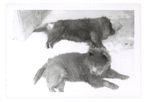 I am assuming these two blue puppies are Bo and Chia. Courtesy Georgia O'Keeffe Museum