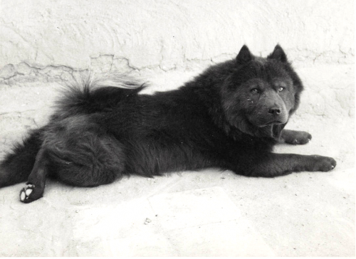 """A beautiful image of one of her blue dogs. This could possibly be """"Bo"""", who she described to have such a smooth coat Courtesy Georgia O'Keeffe Museum"""