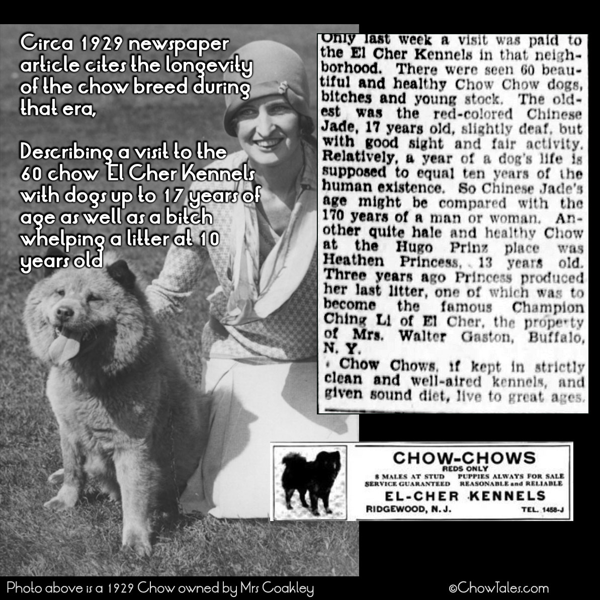1929 Old chows AT El Cher Kennels