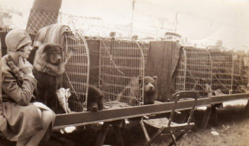An extremely rare 1920's  peek at a chow benching area. This photo is in my personal collection.