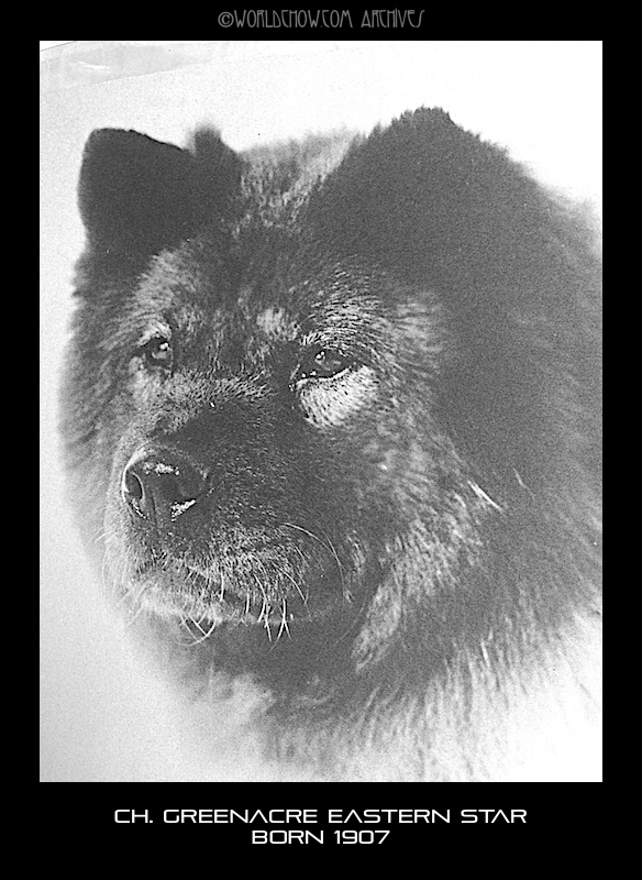 EASTERN STAR WON WESTMINSTER OVER AN ENTRY OF 52  CHOWS IN 1914