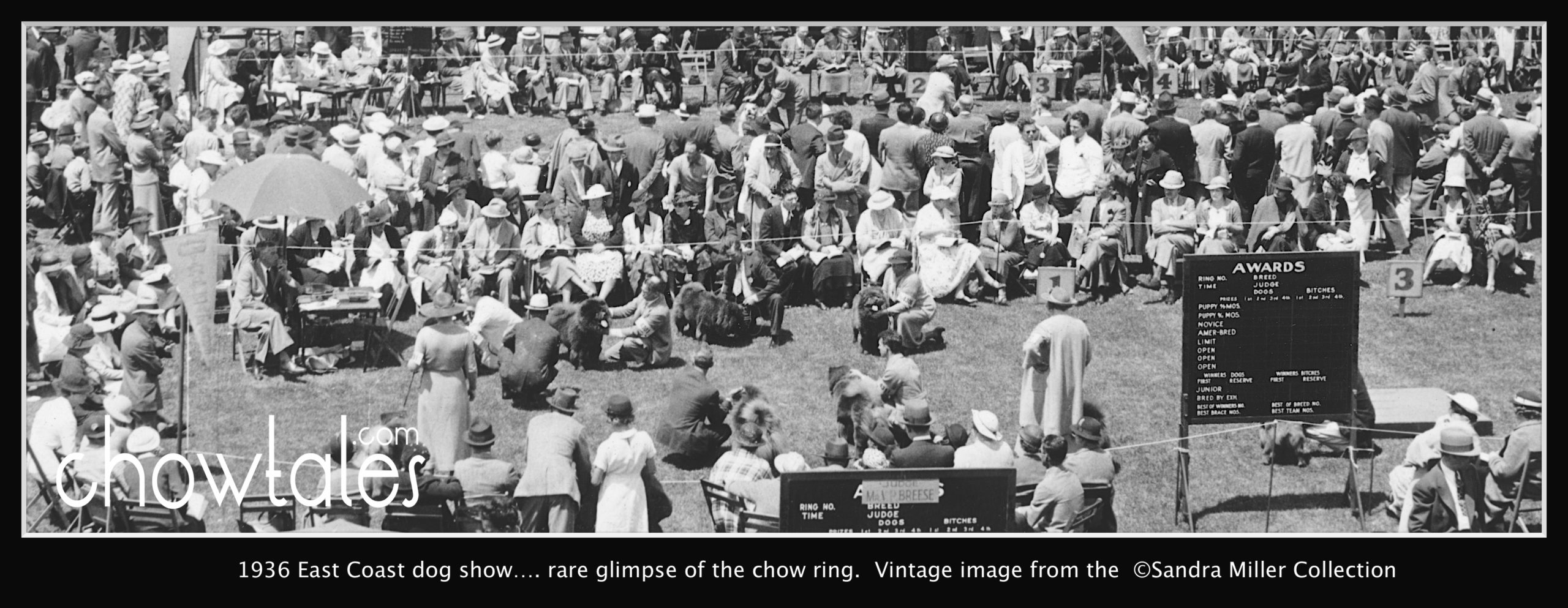 1936 RING FULL OF CHOWS - Version 4 (1 of 1)