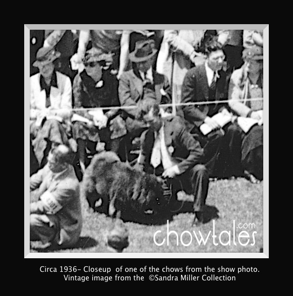 1936 RING FULL OF CHOWS - Version 6 (1 of 1)