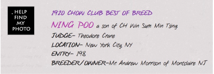 NING POO WAS BEST OF BREED WINNER AT THE FIRST CHOW NATIONAL IN 1920