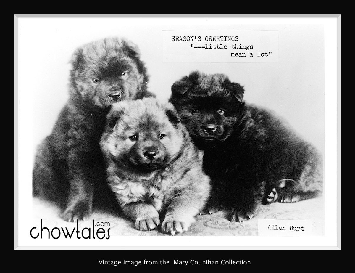 Chow Xmas Card no date.  50s maybe - Version 2 (1 of 1)