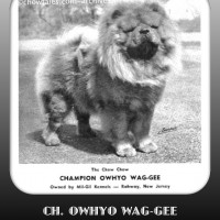 1950 NATIONAL WINNER CHAMPION OWHYO WAG-GEE MIL GIL KENNELS