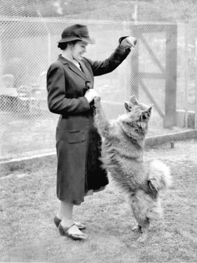 Freud's chow in luxury quarantine quarters in london Ling, the four and a half year old chow bitch who arrived in London with her famous master, Professor Sigmund Freud, has taken up residence in North Kensington at the only quarantine kennels in London, and the only kennels in London which have been formed out of human dining and drawing rooms. Ling is one of a large family of dogs undergoing their compulsory six months detention as the guests of Mr Kevin Quin, an ex-army veterinary surgeon, and his wife. Professor Freud has made telephone inquiries about Ling's health and the dog has barked happily back may be purchased here. http://www.scienceandsociety.co.uk/results.asp?image=10554628&itemw=4&itemf=0005&itemstep=1&itemx=2&screenwidth=1366