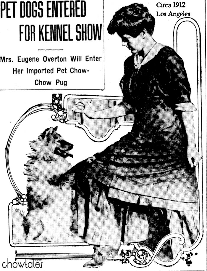 1912 Mrs Overton shows chow pea in Los Angeles her pet imported chow clipping newspaper photo