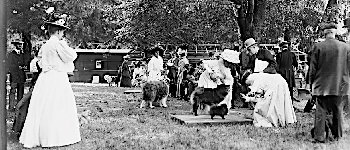 Chow and Pomeranian Judging Mineola show 1908