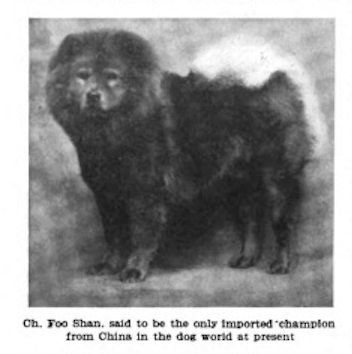 1911 Country Life in America How to buy Chow Dogs from China