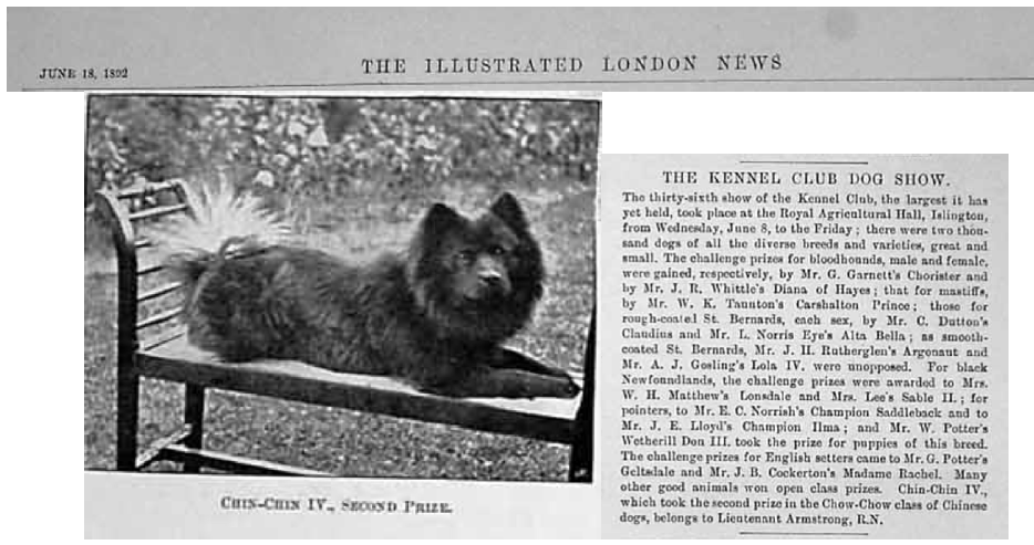 June 18, 1892 Chin-Chin a Chinese imported chow being shown at the 36th Show of The Kennel Club