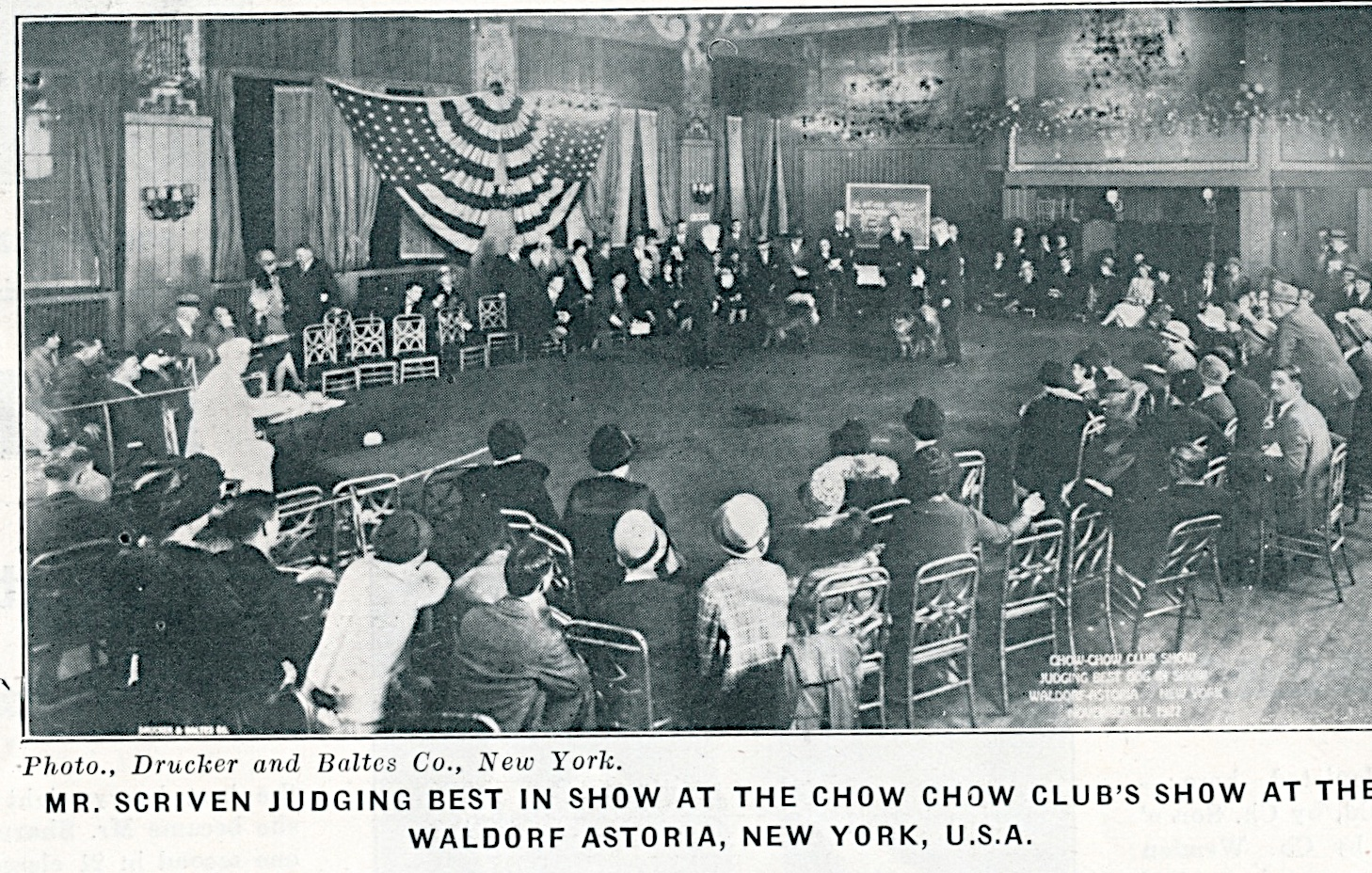 MULFRA article Sept 5 1930 Supplement to Our Dogs.. Mr. Scriven judging in 1927 at the Waldorf Astoria, New York, U.S.A.5